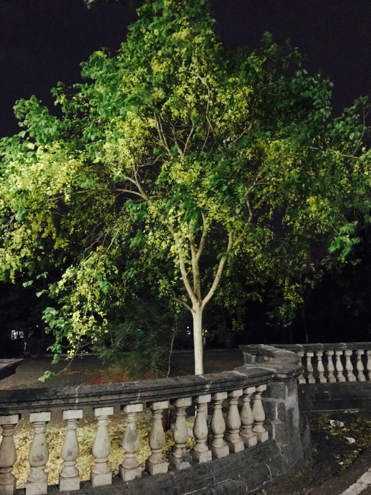 Tree, nature, support system, Family, love, environment, night, windy
